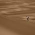 Le désert marocain, au pas des dromadaires