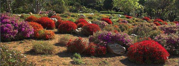 Parcs et jardins du monde le blog evasion for Jardin kirstenbosch