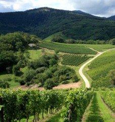 L'Alsace éco-touristique: le naturel avant tout