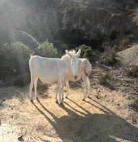 L'île de l'Asinara et ses étonnants animaux