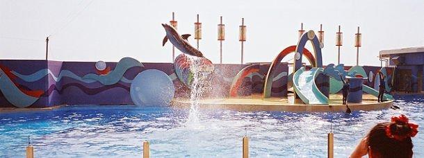ocean-park-hong-kong-parc-attraction