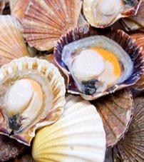 Les fameuses coquille Saint-Jacques de Bretagne