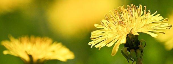 Les herbes typiques de Grèce