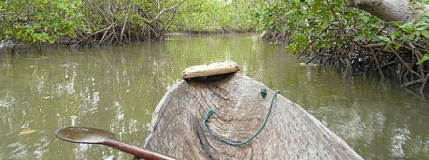 Explorez la mangrove en Casamance, au Sénégal!