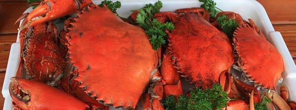 Goûtez le Mud crab d'Australie!