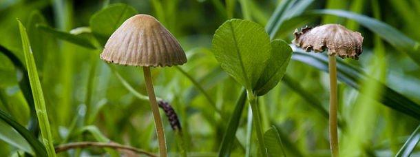 J'ai ramassé des champignons en forêt de Tronçais