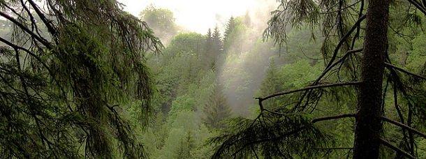 Forêt Noire, Allemagne