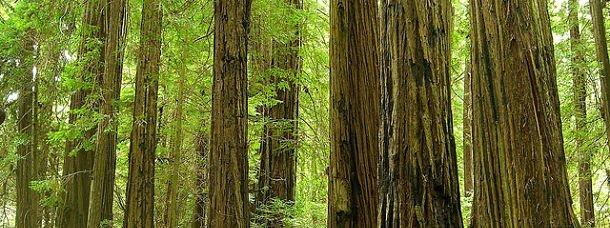 Les plus belles forêts du Monde