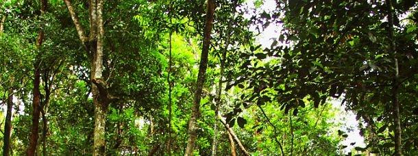 Forêt de Tijuca, Brésil