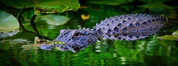 Floride: la nature à l'état pur!