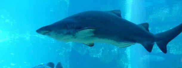 Aquarium de Durban