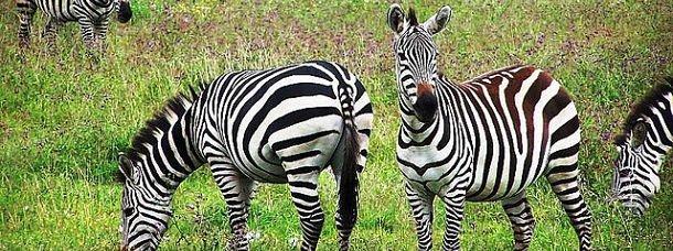 Safari Photo pour un voyage de noces en Tanzanie