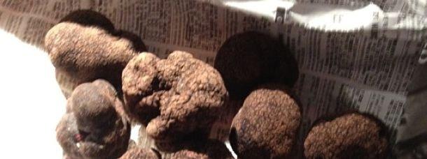 Une vente aux enchères de truffes à Richerenches