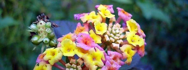 Fleurs du jardin botanique de Madère