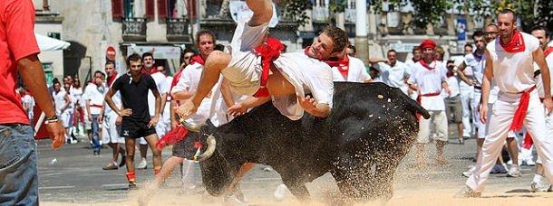 Course de vaches à Bayonne