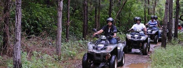 quad dans la forêt