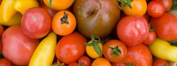 Les tomates colorées