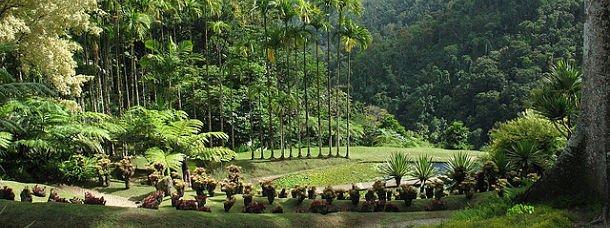 jardin-de-balata