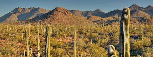 Saguaro route déserts
