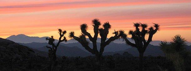 Sur la route des déserts, de la Californie à l'Arizona