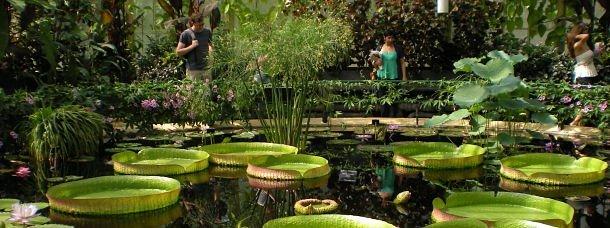 Londres, dans un jardin anglais