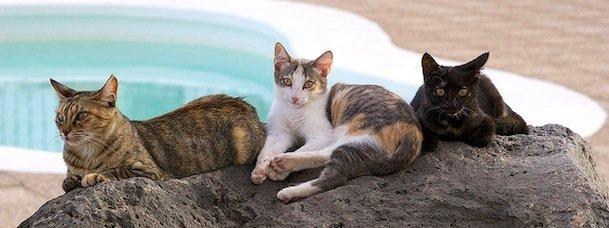9 destinations thématiques sur les chats