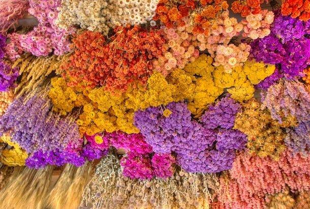 fleurs-sechees-nicolas-ledez