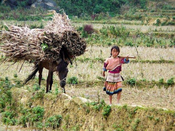vietnam-jeune-fille-dans-les-champs-sapa