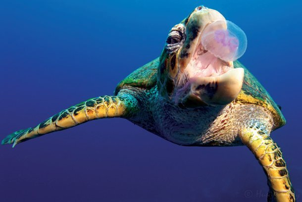 Tortue Maurice