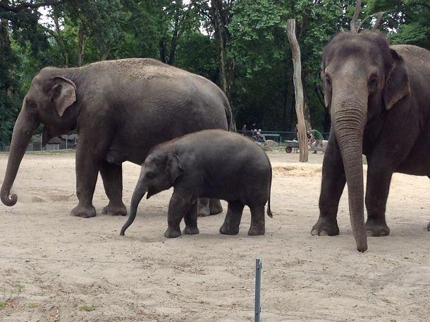 éléphant berlin zoo