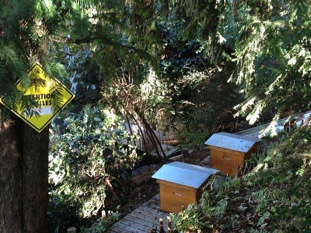 Les ruches de Montmartre