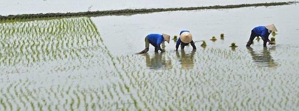 Le Vietnam: que lire/voir avant le grand départ?