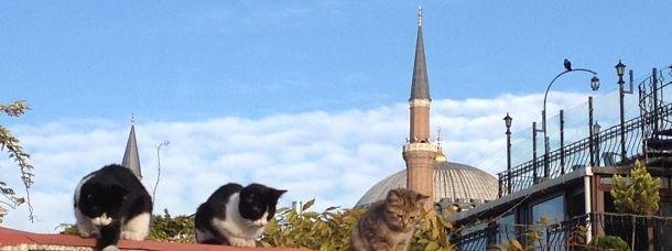 Que voir à Istanbul: les incontournables