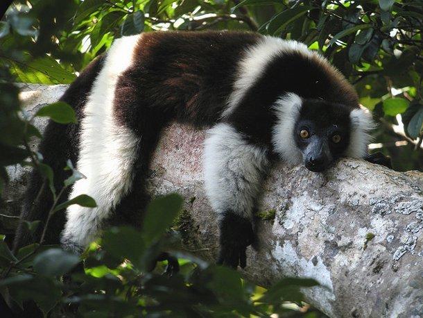 lemurien-madagascar