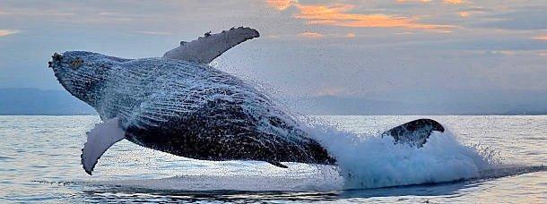Madagascar, la saison des baleines