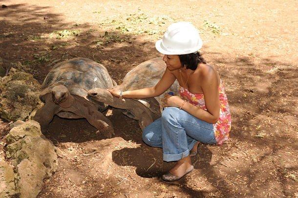Rodrigues, petit moment de tendresse avec les tortues géantes