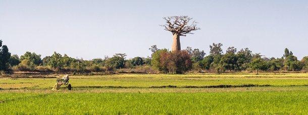 10 spécialités gastronomiques de Madagascar