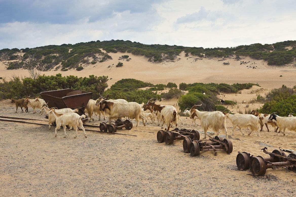 Les dunes de Piscinas ©Lionel Montico/hemis.fr
