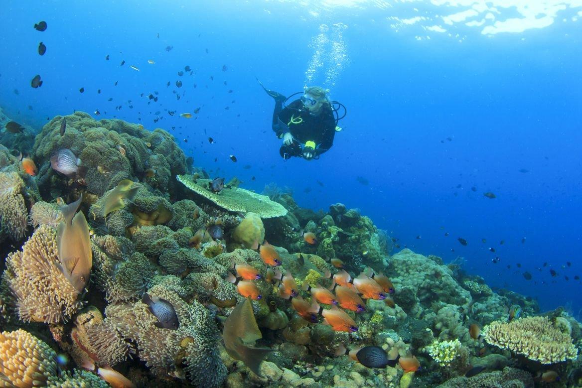 Récif de corail à Bali ©Rich Carey/shutterstock