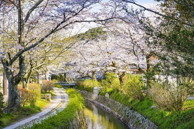 Chemin de la philosophie à Kyoto, incontournable du Japon