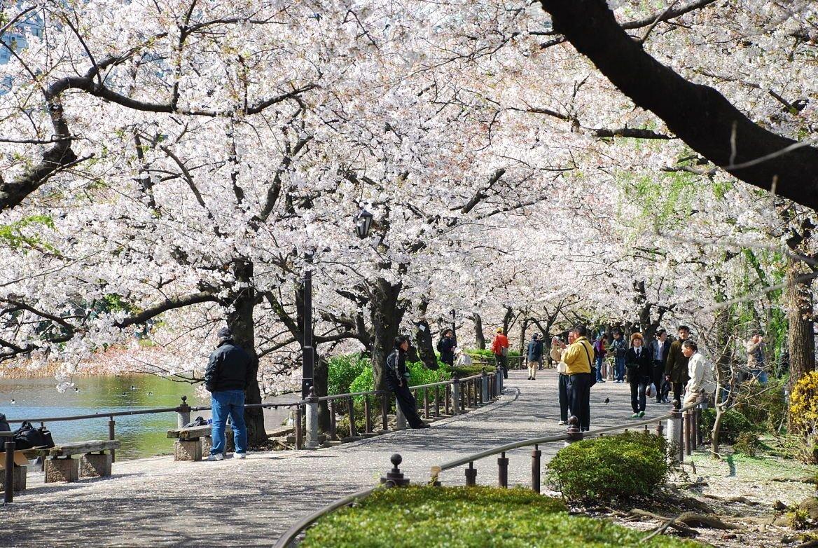 parc de Ueno, Tokyo, Japon