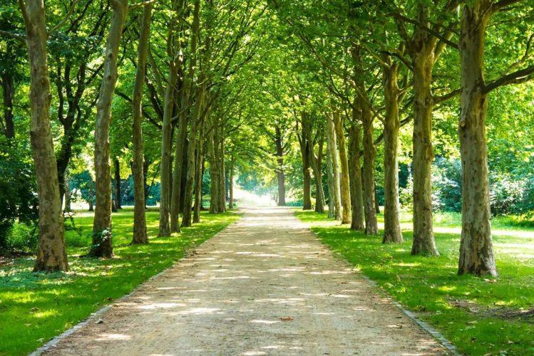 Tiergarten,, Allemagne