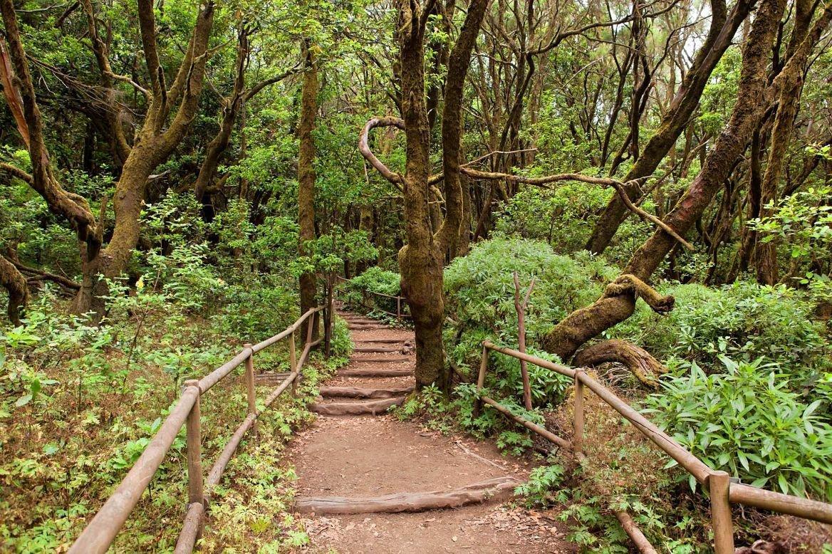Forêt dans le parc de la Garajonay, La Gomera, Canaries