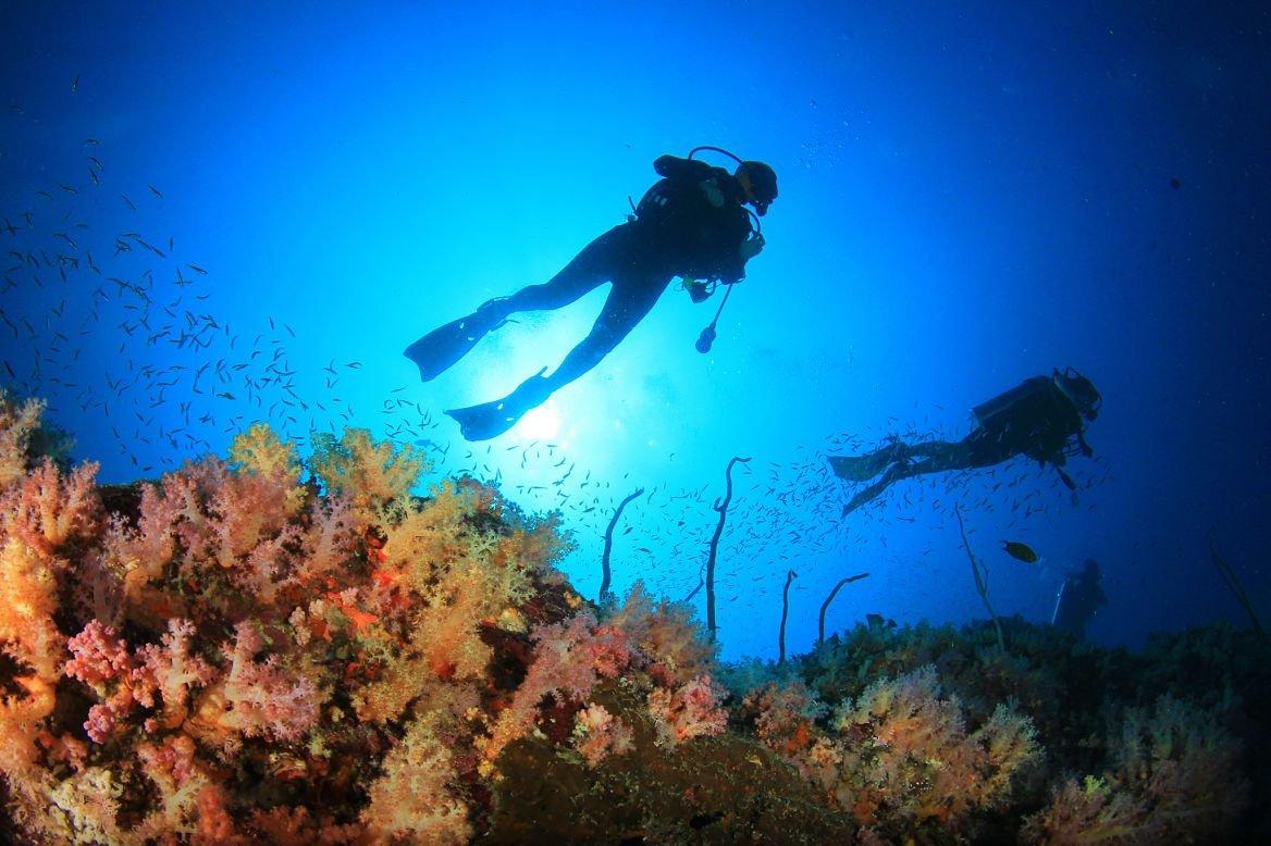 Plongée dans le Reef, Grande Barrière de corail, Australie