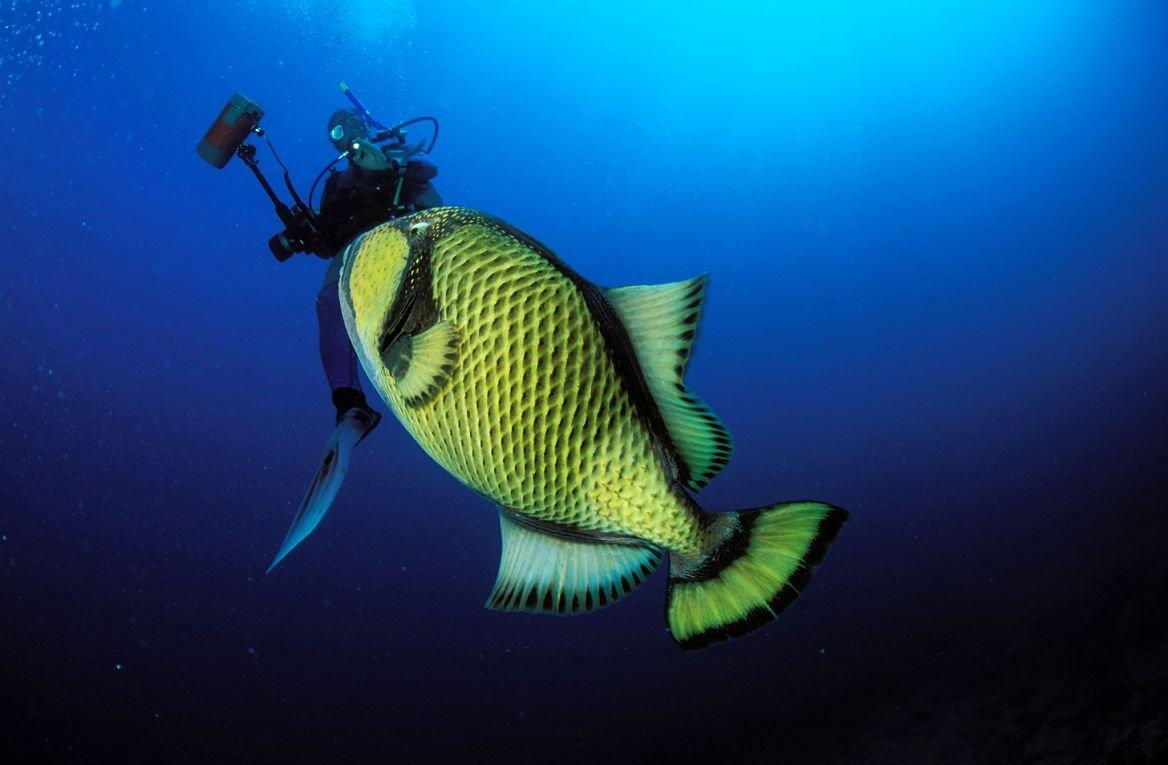Plongée dans le sud de l'île Maurice