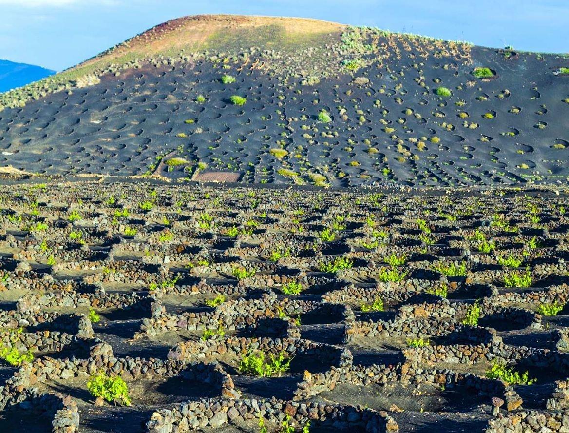 Vignoble de la Geria, Lanzarote, Canaries, Espagne
