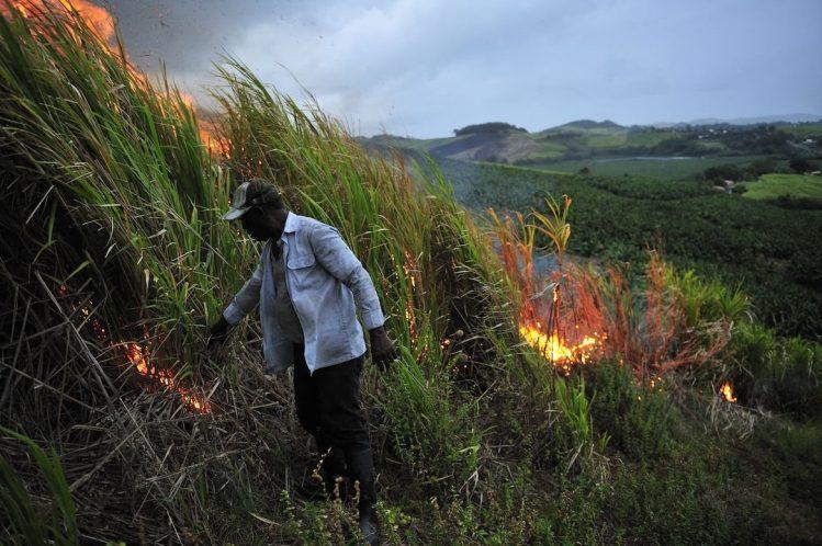 Brûlage d'un champ de canne à sucre avant la récolte en Martinique