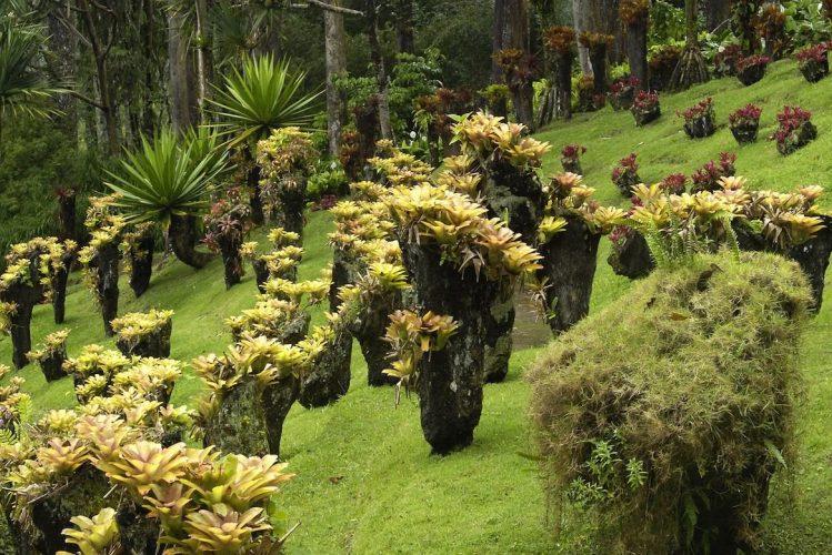 La Martinique, destination idéale pour un voyage à Noël