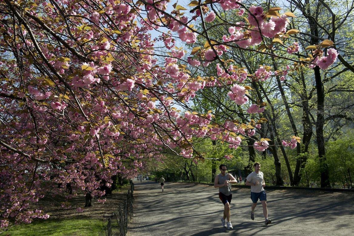 Joggeurs à Central Park