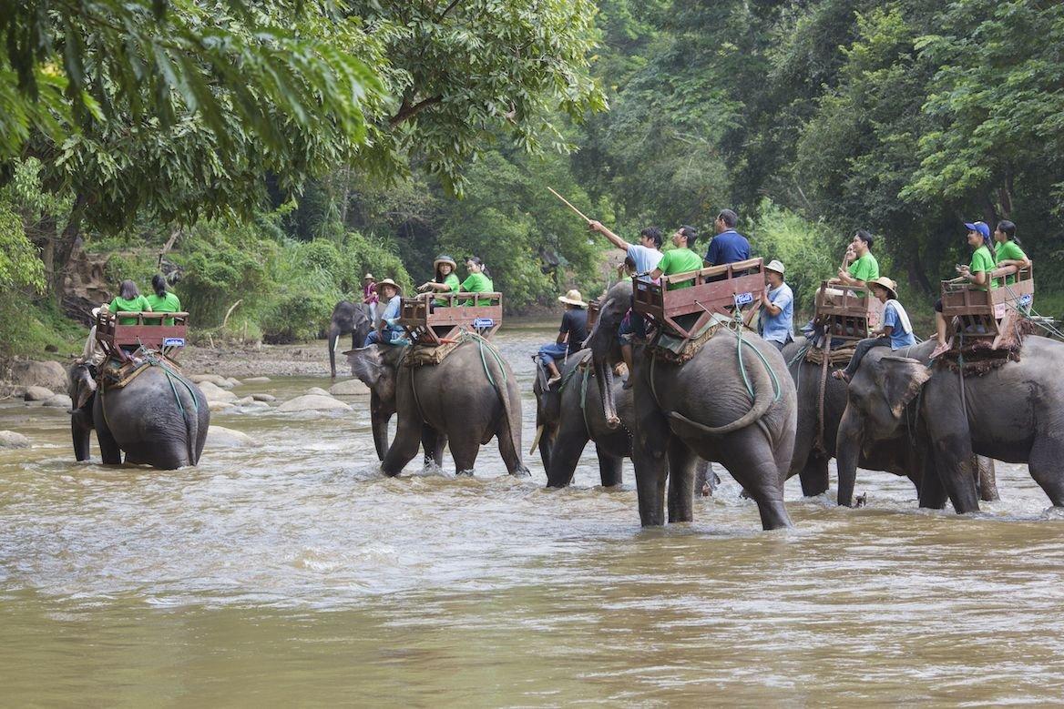 Balade à dos d'éléphant autour de Chiang Maï